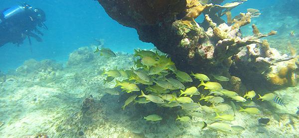 diving_cayo_santa_maria_cuba