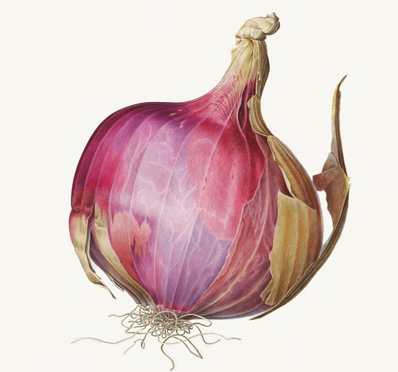 An indian onion, 1971, acuerale en vitela