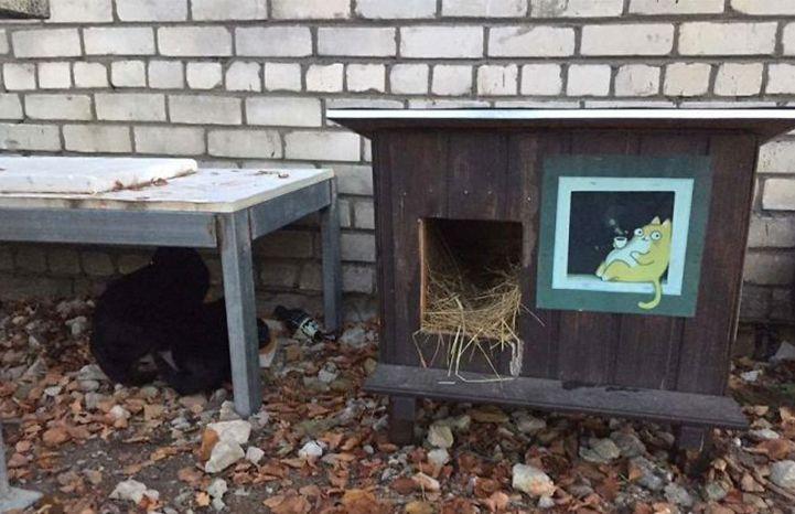 En Este Lugar Están Construyendo Casitas Para Gatos Callejeros Y Las Fotos Te Van A Tocar El Corazón Repsodia